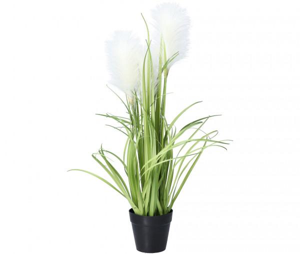 Tony Brown Dekogras mit weißer Blüte